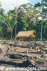 Déforestation - Bassin amazonien (Bolivie)