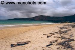 Plage - Isla Santa Maria (Punta Cormorant - Galápagos)