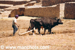 Travail dans les champs - Ollantaytambo (Pérou)